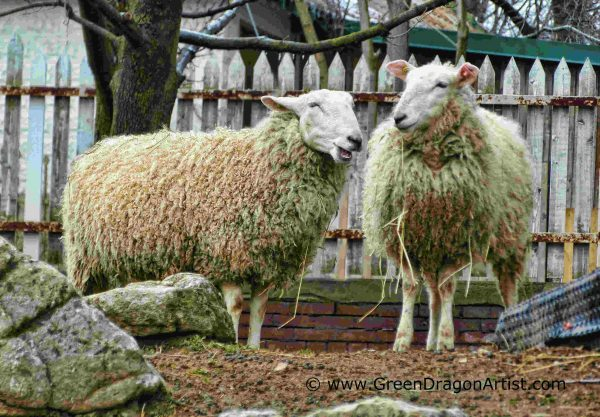 cHaving a Gossip